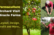 How to Start a Permaculture Orchard | Layout, Deign, Profit and More...