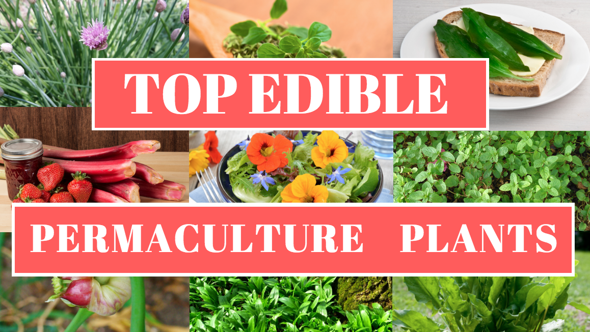 Top Edible Permaculture Plant List