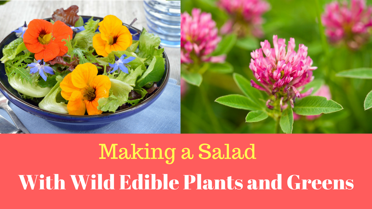 Making a Wild Salad with Wild Edible Plants and Greens | Wild Greens You Can Eat
